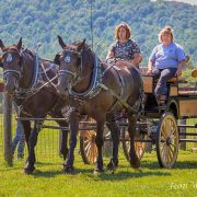 The Southwest Virginia Draft Horse, Mule and Donkey Show was a big attraction.