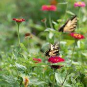 pollinators garden_2